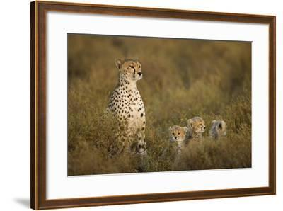 Cheetah Cubs and their Mother-Paul Souders-Framed Photographic Print