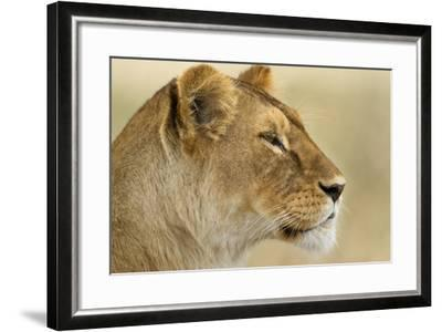Lioness--Framed Photographic Print