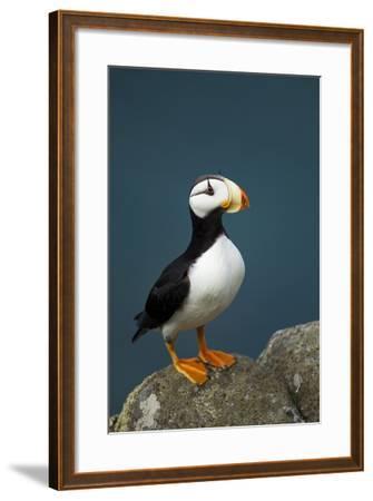 Puffin, Katmai National Park, Alaska-Paul Souders-Framed Photographic Print