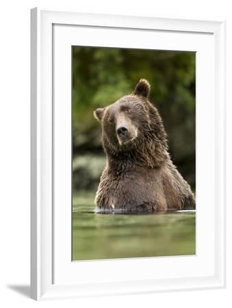 Brown Bear, Katmai National Park, Alaska--Framed Photographic Print