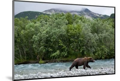 Brown Bear, Katmai National Park, Alaska-Paul Souders-Mounted Photographic Print