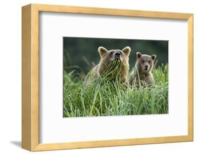 Brown Bear and Cub, Katmai National Park, Alaska-Paul Souders-Framed Photographic Print
