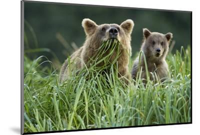 Brown Bear and Cub, Katmai National Park, Alaska-Paul Souders-Mounted Photographic Print