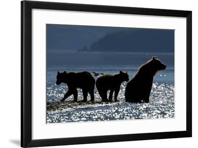 Brown Bear and Cubs, Katmai National Park, Alaska-Paul Souders-Framed Photographic Print