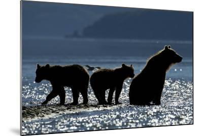 Brown Bear and Cubs, Katmai National Park, Alaska-Paul Souders-Mounted Photographic Print