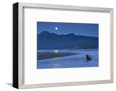 Brown Bear and Full Moon, Katmai National Park, Alaska-Paul Souders-Framed Photographic Print
