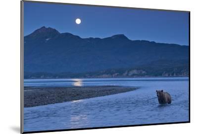 Brown Bear and Full Moon, Katmai National Park, Alaska-Paul Souders-Mounted Photographic Print