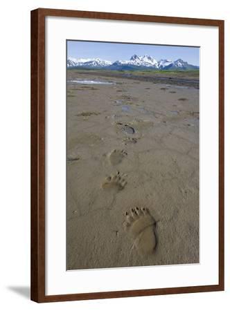 Brown Bear Tracks at Hallo Bay in Katmai National Park-Paul Souders-Framed Photographic Print