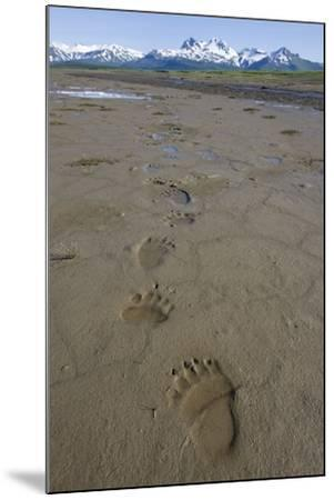 Brown Bear Tracks at Hallo Bay in Katmai National Park-Paul Souders-Mounted Photographic Print