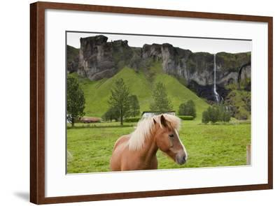 Icelandic Horse Near Waterfall-Paul Souders-Framed Photographic Print