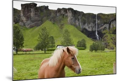 Icelandic Horse Near Waterfall-Paul Souders-Mounted Photographic Print