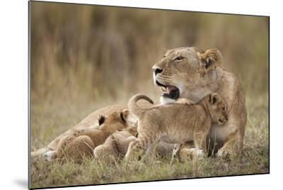Lioness Nursing Cubs in Masai Mara National Reserve-Paul Souders-Mounted Photographic Print