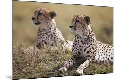 Cheetahs Resting in Grass-Paul Souders-Mounted Photographic Print
