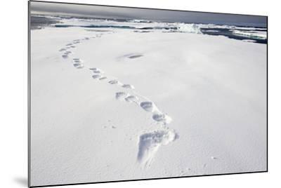 Polar Bear Tracks in Fresh Snow at Spitsbergen Island-Paul Souders-Mounted Photographic Print