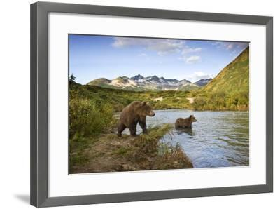 Two Year Old Grizzly Bears on Riverbank at Kinak Bay-Paul Souders-Framed Photographic Print