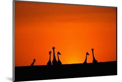 Giraffe Silhouettes at Sunset-Paul Souders-Mounted Photographic Print