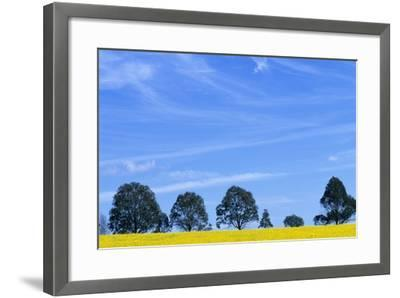 Field of Bright Yellow Mustard Seed--Framed Photographic Print