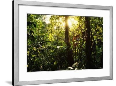 Tropical Rainforest in Panama--Framed Photographic Print
