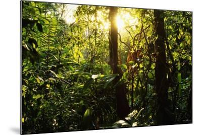 Tropical Rainforest in Panama--Mounted Photographic Print