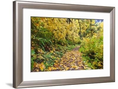 Fall Colors Add Beauty Trail, Silver Falls State Park, Oregon-Craig Tuttle-Framed Photographic Print