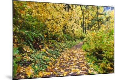 Fall Colors Add Beauty Trail, Silver Falls State Park, Oregon-Craig Tuttle-Mounted Photographic Print