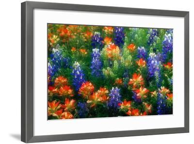 Bluebonnets and Paint Brush-Darrell Gulin-Framed Photographic Print