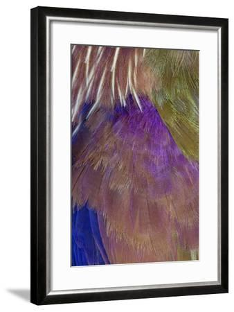 Neck and Chest Feather Pattern of Roufus-Crowed Roller-Darrell Gulin-Framed Photographic Print