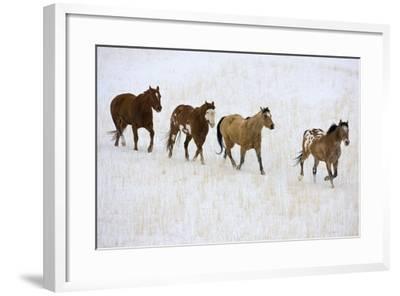 American Quarter Horses in Winter-Darrell Gulin-Framed Photographic Print