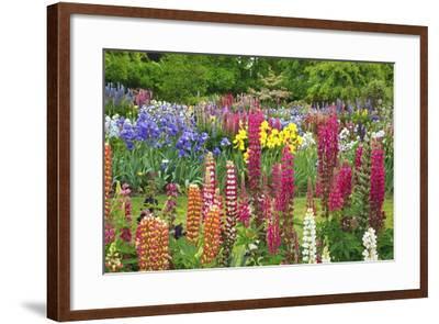 Schreiner Iris Gardens in Salem, Oregon-Craig Tuttle-Framed Photographic Print