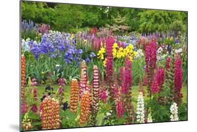 Schreiner Iris Gardens in Salem, Oregon-Craig Tuttle-Mounted Photographic Print