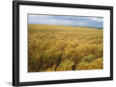 Wheat Blowing in the Wind-Darrell Gulin-Framed Photographic Print