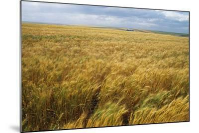 Wheat Blowing in the Wind-Darrell Gulin-Mounted Photographic Print