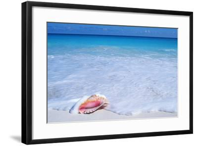 Mexico, Yucatan Peninsula, Carribean Beach at Cancun, Conch Shell on Sand-Chris Cheadle-Framed Photographic Print