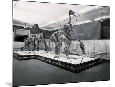 View of Tyrannosaur Skeletons in Museum--Mounted Photographic Print