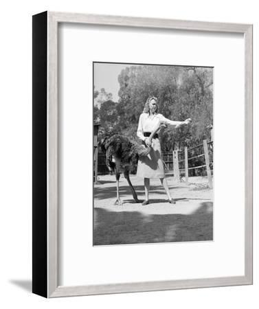 Woman Feeds Ostrich Orange on Farm-Philip Gendreau-Framed Photographic Print