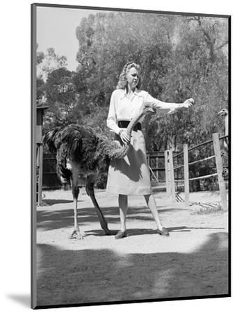 Woman Feeds Ostrich Orange on Farm-Philip Gendreau-Mounted Photographic Print