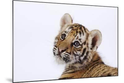 Tiger Cub-Martin Harvey-Mounted Photographic Print