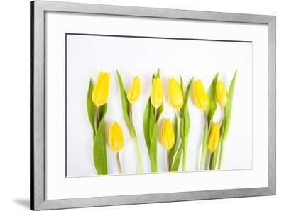 Yellow Tulips-Frank Lukasseck-Framed Photographic Print