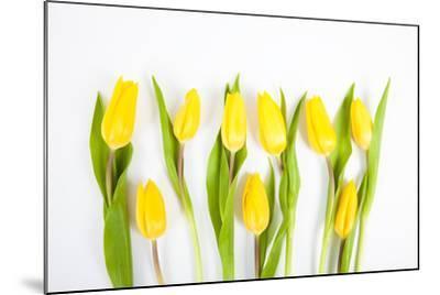 Yellow Tulips-Frank Lukasseck-Mounted Photographic Print