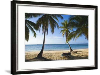 Palm Trees on Beach, Las Terrenas, Samana Peninsula, Dominican Republic-Massimo Borchi-Framed Photographic Print