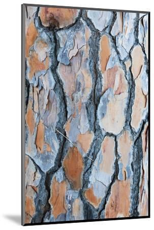 Pine Tree Bark-Frank Lukasseck-Mounted Photographic Print