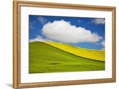 Rolling Hills of Canola and Pea Fields with Fresh Spring Color--Framed Photographic Print