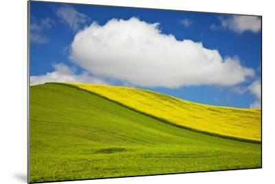 Rolling Hills of Canola and Pea Fields with Fresh Spring Color--Mounted Photographic Print