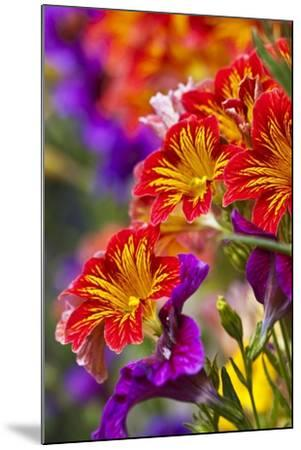 Salpiglossis Flowers in Full Bloom-Terry Eggers-Mounted Photographic Print