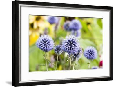 Flowering Garden-Frank Lukasseck-Framed Photographic Print