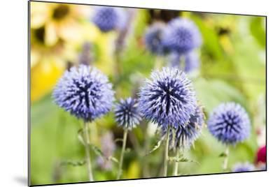 Flowering Garden-Frank Lukasseck-Mounted Photographic Print