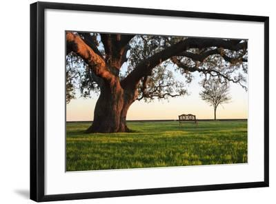 A Grand Oak Tree Overhangs a Lone Bench at Sunset.-Jason Langley-Framed Photographic Print