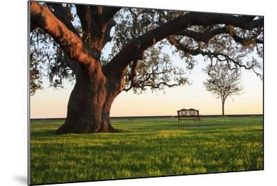 A Grand Oak Tree Overhangs a Lone Bench at Sunset.-Jason Langley-Mounted Photographic Print