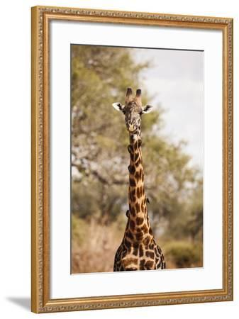 Endemic Thornicroft Giraffe-Michele Westmorland-Framed Photographic Print