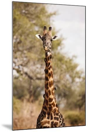 Endemic Thornicroft Giraffe-Michele Westmorland-Mounted Photographic Print